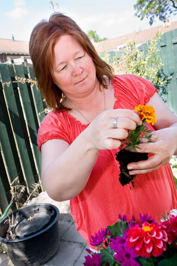 Vrouw in tuin met planten bezig